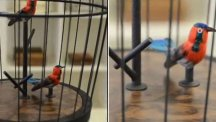 Video. Ballon Bird Cage