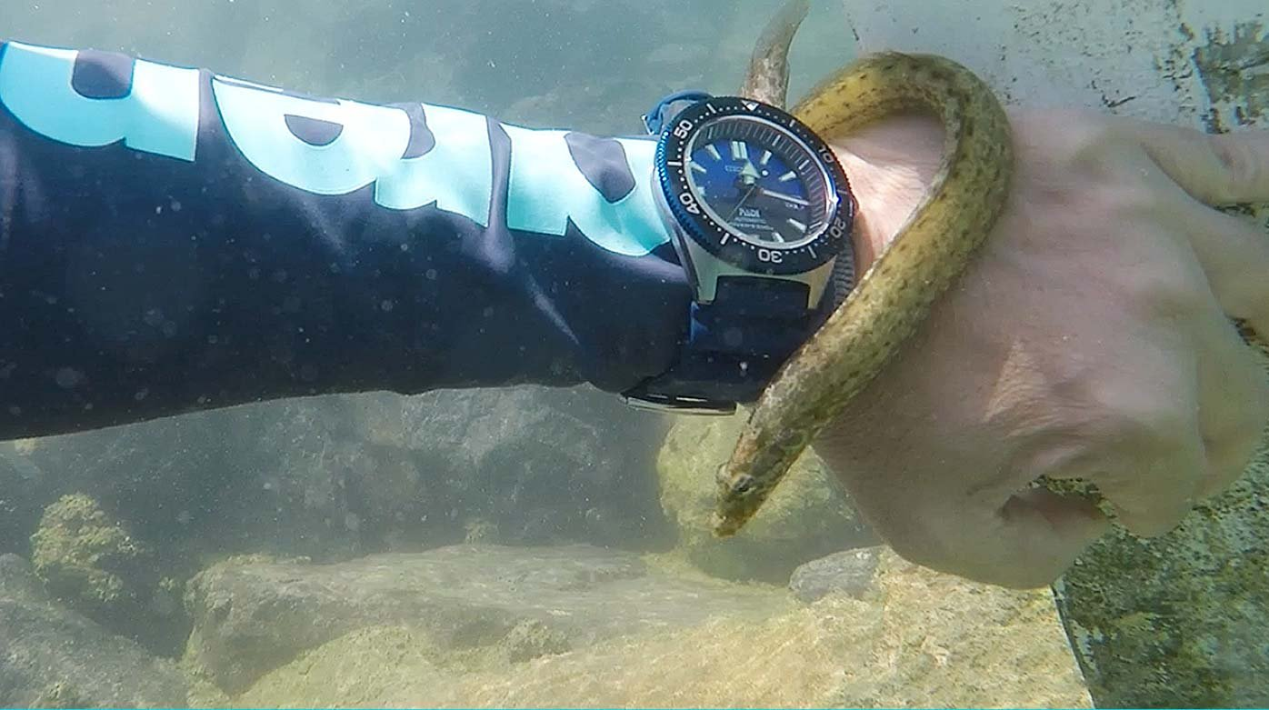 Seiko - Dive attraction